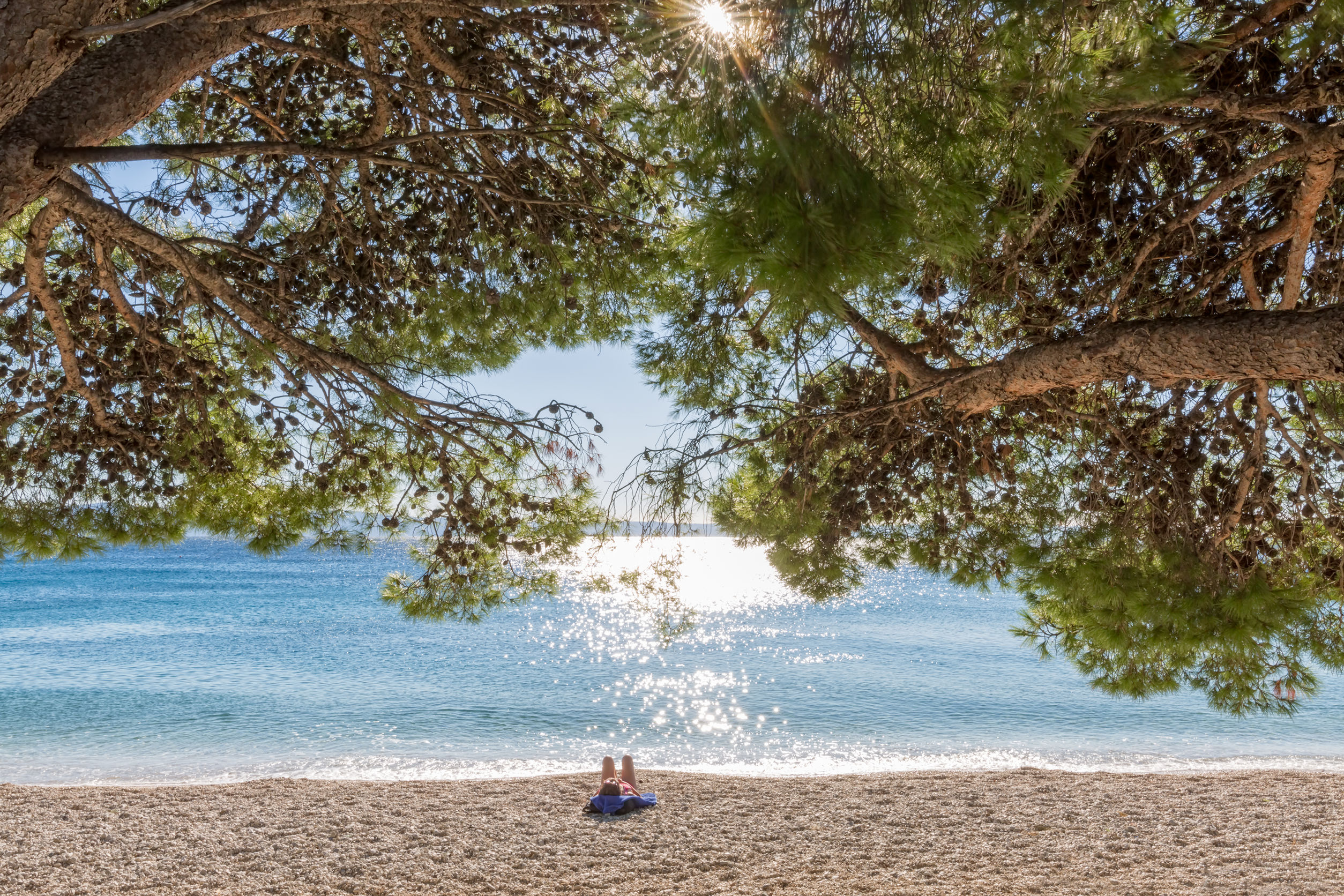 65565398 - sunbathing under the pine tree on the tucepi town beach.